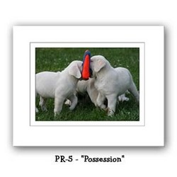 """Possession"" Double Matted Prints 8x10"