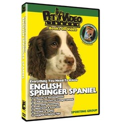 English Springer Spaniel - Everything You Should Know