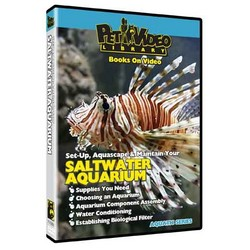 Set-Up Aquascape & Maintain Saltwater Aquarium