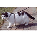 SmartCat Adjustable Harness & Leash<br>Item number: 3840: Cats Collars and Leads Harnesses