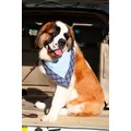 "Slobber Blotter for Boys - One Size (28-30"")<br>Item number: SBB01: Cats Accessories Bandanas"