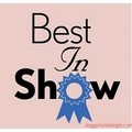 Best In Show: Dogs Pet Apparel Tanks