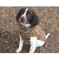 Vintage Multi Cable Knit Sweater: Dogs Pet Apparel Sweaters