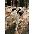 KURGO WANDER PACK DOG BACKPACK<br>Item number: KUR0028: Dogs Collars and Leads Harnesses