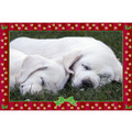 7&quot; x 5 &quot; Greeting Cards - Christmas #2<br>Item number: 066: Dogs Holiday Merchandise Christmas Items