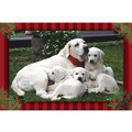 7&quot; x 5 &quot; Greeting Cards - Christmas #5<br>Item number: 069: Dogs Holiday Merchandise Christmas Items