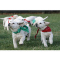 "7"" x 5 "" Greeting Cards - Birthday #4<br>Item number: 044: Dogs Holiday Merchandise Birthday Items"