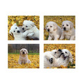 5.5&quot; x 4&quot; Notecard Packs #3<br>Item number: NS3: Dogs