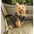 Pet Vehicle Harness: Dogs Collars and Leads