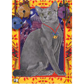 Cats - Russian Blue<br>Item number: C493: Cats