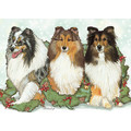 Shetland Sheepdogs<br>Item number: C524: Dogs Holiday Merchandise