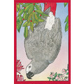 Birds-African Greys<br>Item number: C873: Birds Accessories Bandanas