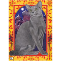 Cats-Russian Blue Note Cards<br>Item number: N493B: Cats