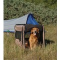 Bone Voyage Pup Tent: Dogs