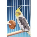 Seed Treat Discs: Birds Feeding Bowls