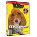 Basset Hound - Everything You Should Know<br>Item number: 71528: Dogs Training Products