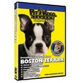 Boston Terrier - Everything You Should Know<br>Item number: 71535