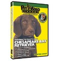 Chesapeake Bay Retriever - Everything You Should Know<br>Item number: 71539: Dogs