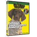 German Shorthaired Pointer - Everything You Should Know<br>Item number: 71531: Dogs