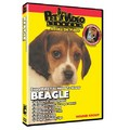 Beagle - Everything You Should Know<br>Item number: 71516
