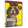 Bernese Mountain Dog - Everything You Should Know<br>Item number: 71549: Dogs Training Products