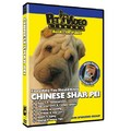 Chinese Shar-Pei - Everything You Should Know<br>Item number: 71555