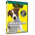 Jack Russell Terrier - Everything You Should Know<br>Item number: 71511: Dogs Training Products