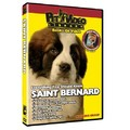 Saint Bernard - Everything You Should Know<br>Item number: 71554: Dogs