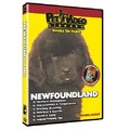 Newfoundland - Everything You Should Know<br>Item number: 71553: Dogs Training Products