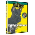 Scottish Terrier - Everything You Should Know<br>Item number: 71558: Dogs Training Products