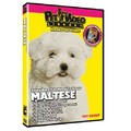 Maltese - Everything You Should Know<br>Item number: 71545: Dogs