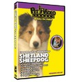 Shetland Sheepdog - Everything You Should Know<br>Item number: 71544: Dogs Training Products