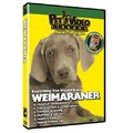 Weimaraner - Everything You Should Know<br>Item number: 71533: Dogs Training Products