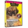 Pekingese - Everything You Should Know<br>Item number: 71537