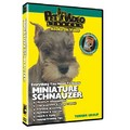 Miniature Schauzer - Everything You Should Know<br>Item number: 71522