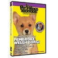 Pembroke Welsh Corgi - Everything You Should Know<br>Item number: 71521