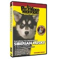 Siberian Husky - Everything You Should Know<br>Item number: 71517: Dogs Training Products