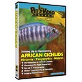Set-Up &amp; Maintain African Cichlids<br>Item number: 71599: Fish Educational Products